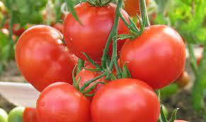 Удобрения помидор сульфатом калия