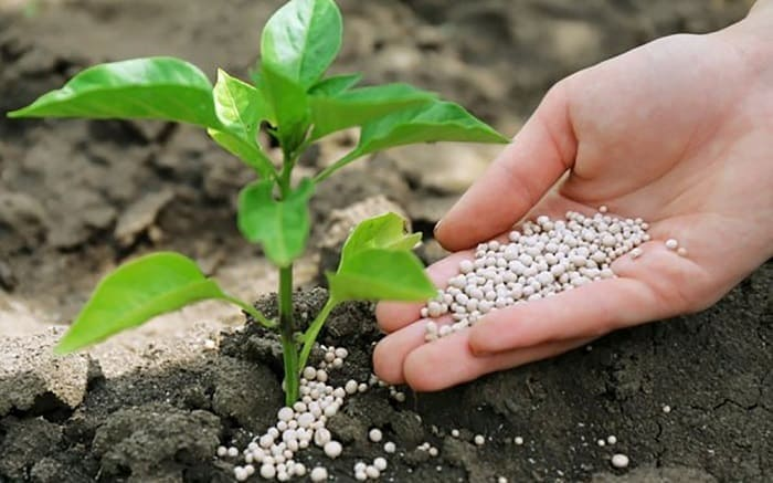 Преимущества сульфата калия для растений